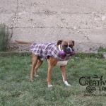 Tutorial: come fare un cappottino per cani